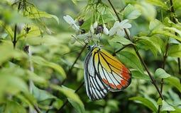 Bloem en vlinder 106 Stock Foto