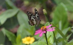 Bloem en vlinder Royalty-vrije Stock Afbeelding