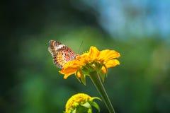 Bloem en vlinder Royalty-vrije Stock Foto