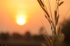 Bloem en zonsondergang Stock Foto