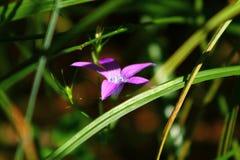 Bloem in het gras stock afbeeldingen