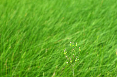 Bloem het groeien onder het groene gras Stock Foto's