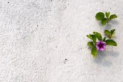 Bloem in het zand Stock Fotografie