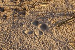 Bloem in het zand Royalty-vrije Stock Foto's