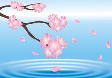 Bloem hierboven - water Stock Fotografie