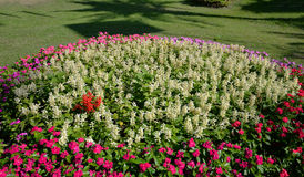 Bloem kleurrijk in tuin royalty-vrije stock fotografie