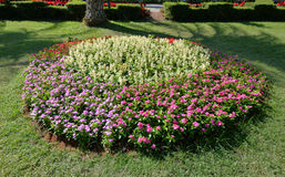 Bloem kleurrijk in tuin royalty-vrije stock foto