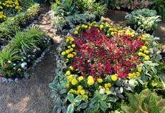 Bloem kleurrijk in tuin stock fotografie