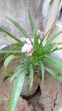 Bloem met bloemblaadjes Royalty-vrije Stock Afbeeldingen