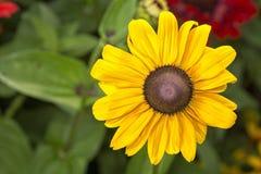 Bloem met bruine gele bloesem stock afbeeldingen