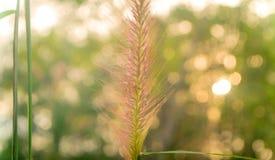 Bloem met de aardachtergrond van de groen licht bokeh lente stock afbeelding