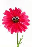 Bloem met een het glimlachen gezicht Stock Foto