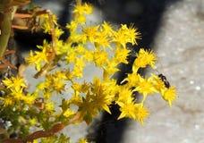 Bloem met insect royalty-vrije stock afbeeldingen