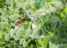 Bloem met insect royalty-vrije stock afbeelding