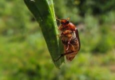 Bloem met insect royalty-vrije stock foto