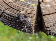 Bloem met insect stock afbeelding