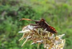 Bloem met insect royalty-vrije stock foto's
