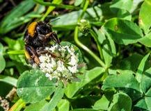 Bloem met insect stock foto