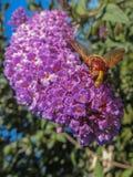 Bloem met insect royalty-vrije stock fotografie