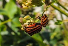 Bloem met insect stock afbeeldingen