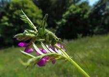 Bloem met insect stock foto's