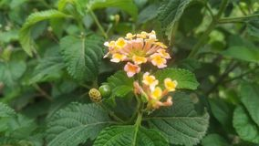bloem met mooie geur en kleur royalty-vrije stock foto