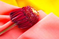 Bloem met purpere bladeren die op de roze en gele stof liggen royalty-vrije stock foto's