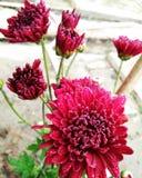 bloem met regendaling Royalty-vrije Stock Afbeeldingen