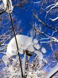 Bloem met sneeuw wordt behandeld die Royalty-vrije Stock Afbeelding