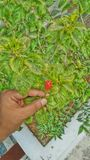 Bloem in mijn hand Stock Fotografie