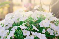 bloem mooi wit stock afbeelding