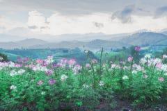 Bloem na regen achtergrondbergen Stock Foto