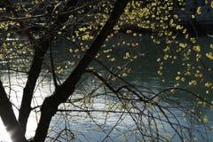 Bloem naast de rivier stock afbeelding