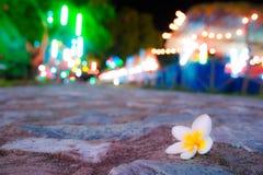 Bloem in nacht Stock Foto