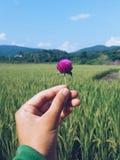 Bloem onder rijst wordt gehouden die Stock Fotografie