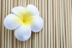 Bloem op bamboe Stock Foto