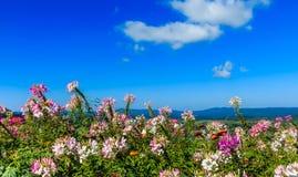 Bloem op berg onder zonneschijn en blauwe hemel Stock Fotografie