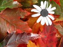Bloem op de herfstbladeren stock foto's