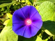 Bloem op de tuinachtergrond in een zonnige dag Stock Foto's