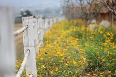Bloem op de vallei in koel en ver, geel gevoelsgoed Stock Foto's