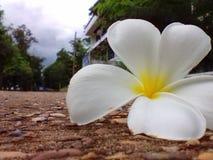 bloem op de vloer Stock Foto