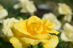 Bloem op een achtergrond van bloemen stock foto's