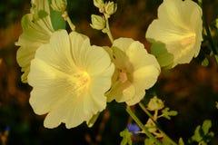 bloem op een bruine achtergrond royalty-vrije stock fotografie