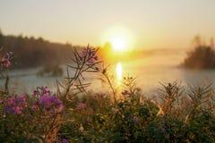 Bloem op een gebied bij zonsondergang Stock Afbeelding