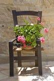 Bloem op een houten stoel Stock Afbeeldingen