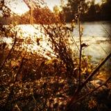 Bloem op een rivier Stock Foto's