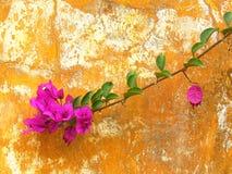 Bloem op een roestige muur Stock Afbeeldingen