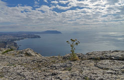 Bloem op een rotsachtige klip op de achtergrond van het overzees Stock Foto