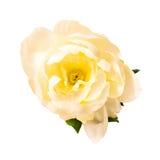 Bloem op een witte achtergrond Royalty-vrije Stock Foto's