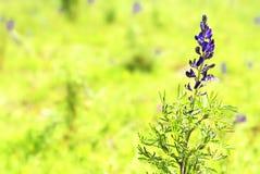 bloem op groen gebied Royalty-vrije Stock Afbeelding